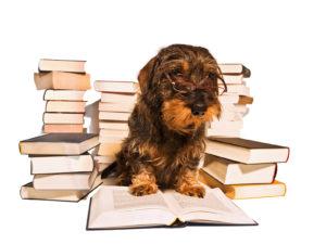 Dackel beim Lesen